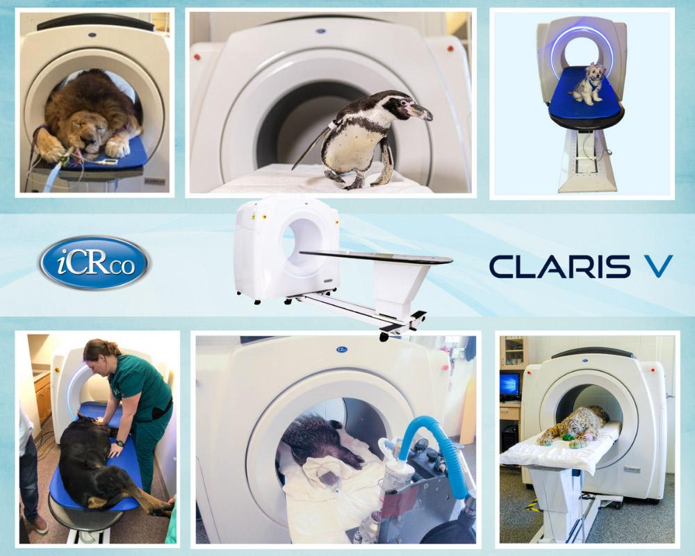 Claris V resimleri